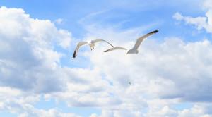 Водная прогулка по Онежскому озеру на современном теплоходе «Элиен Ольга» - уменьшенная копия фото №3