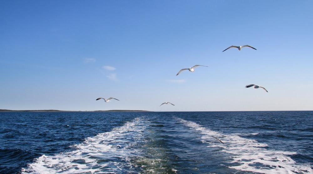 Водная прогулка по Онежскому озеру на современном теплоходе «Элиен Ольга» - фото №1