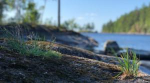 Экскурсия на остров Валаам из Приозерска на метеоре - уменьшенная копия фото №9
